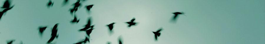 news-ultimae-website-migration