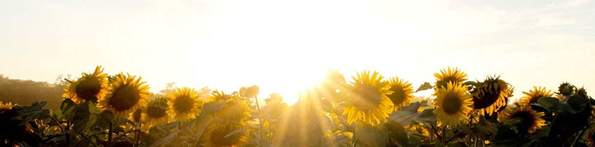 20-24 July 2015   Solar United Natives Festival