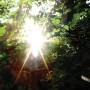 ISHQ | Summer Light - CD