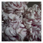 SIGHA | Metabolism (Token) - LP