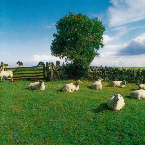 KLF | Chill Out (KLF Communications) - LP