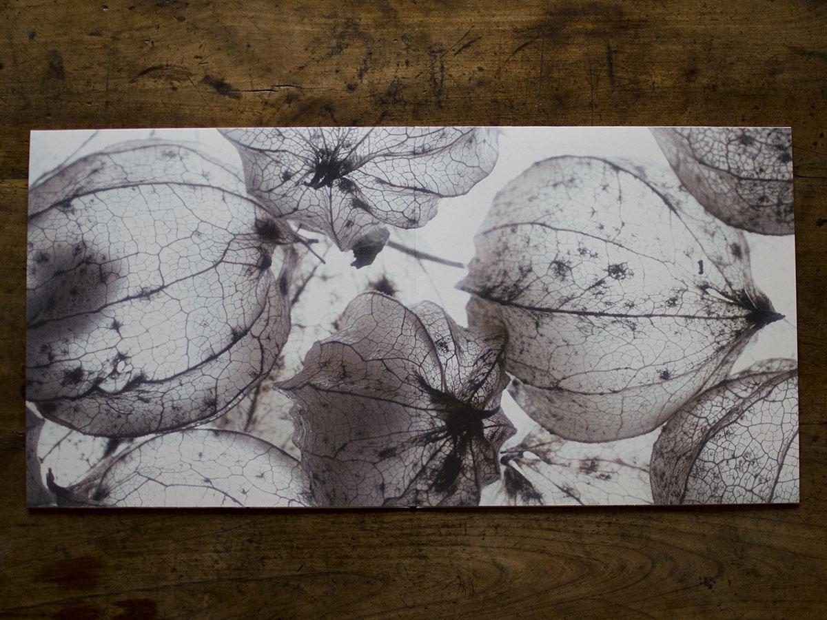 Martin Nonstatic Ligand Ultimae Records 2xlp