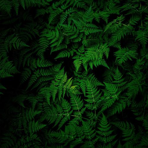 TOKI FUKO | Spring Ray (Silent Season) - 2xLP