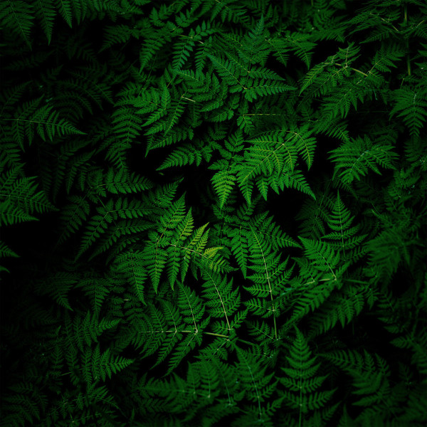 TOKI FUKO | Spring Ray (Silent Season) – 2xLP