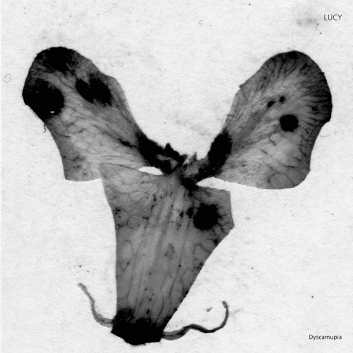 LUCY | Dyscamupia (Stroboscopic Artefacts) - EP