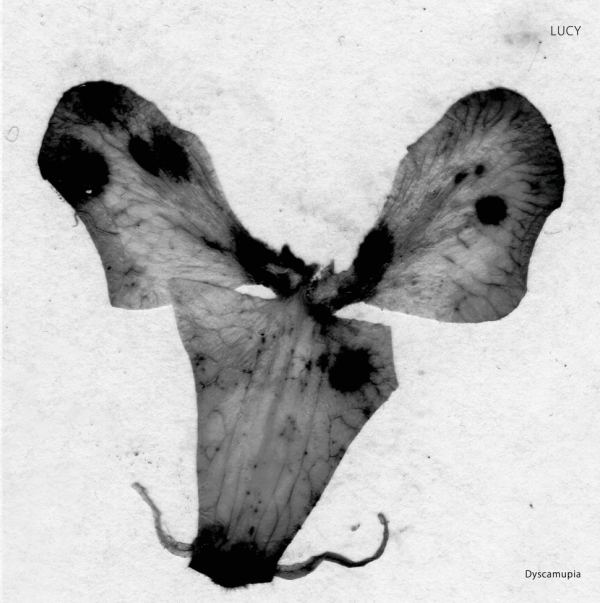 LUCY | Dyscamupia (Stroboscopic Artefacts) – EP