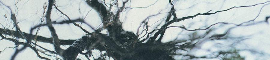 YUTAKA HIROSE | Nova + 4 (WRWTFWW Records)