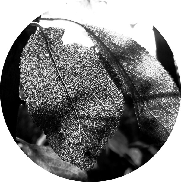 Affinity 3 | VARIOUS ARTISTS (Affin LTD) – EP