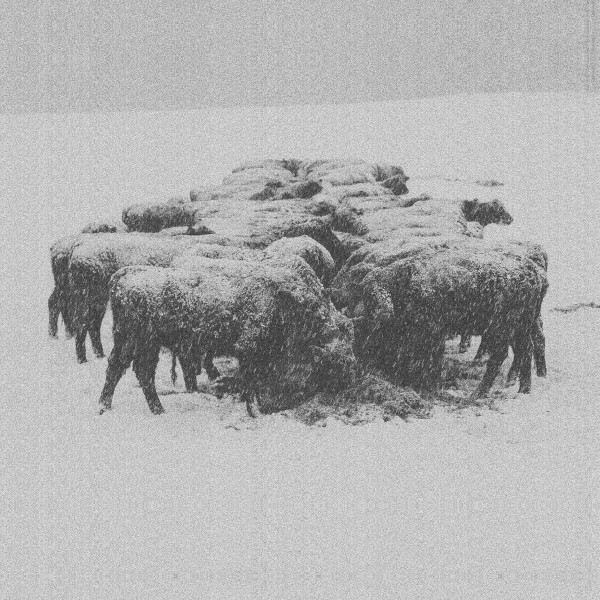 BVDUB | Ten Times The World Lied (Glacial Movements) – CD