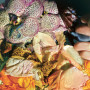 SOELA | Genuine Silk (Dial) - 2xLP