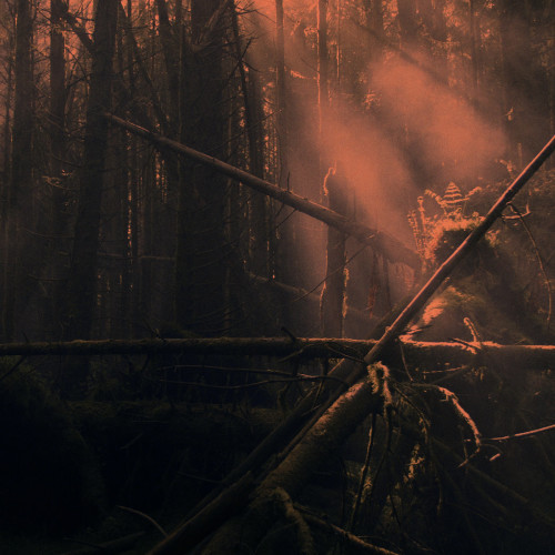 ROLY PORTER | Kistvaen (Subtext) - CD/2xLP