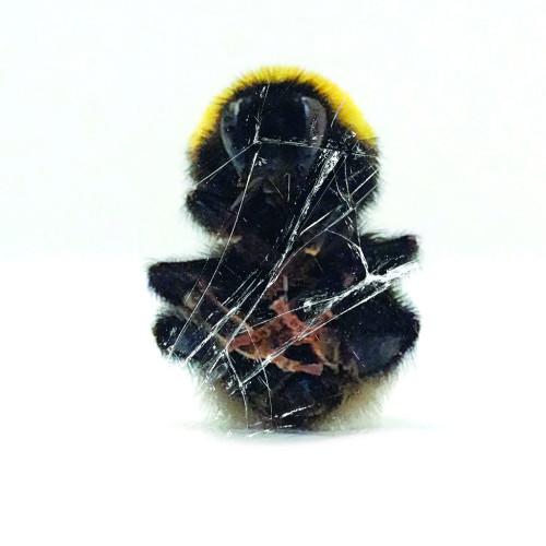 DEADBEAT | Walls And Dimensions (BLKRTZ) - CD