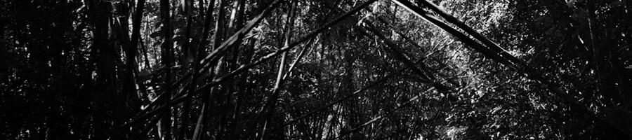 repress ANDREW PEKLER | Tristes Tropiques (Faitiche) - Repress