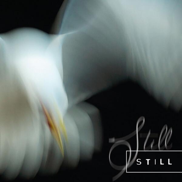 ARIA ROSTAMI & DANIEL BLOMQUIST | Still – CD