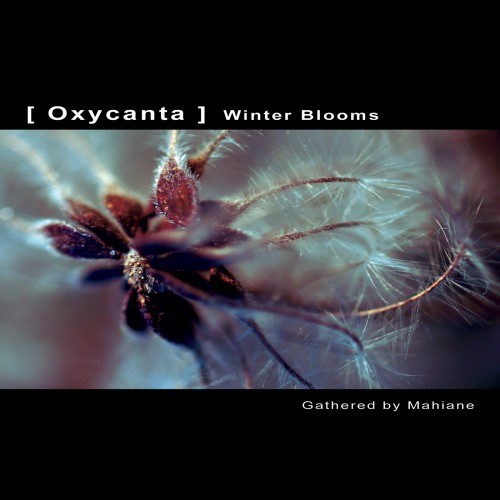 VA - OXYCANTA WINTER BLOOMS | Gathered by Mahiane - Download 16bit (Ultimae Records)
