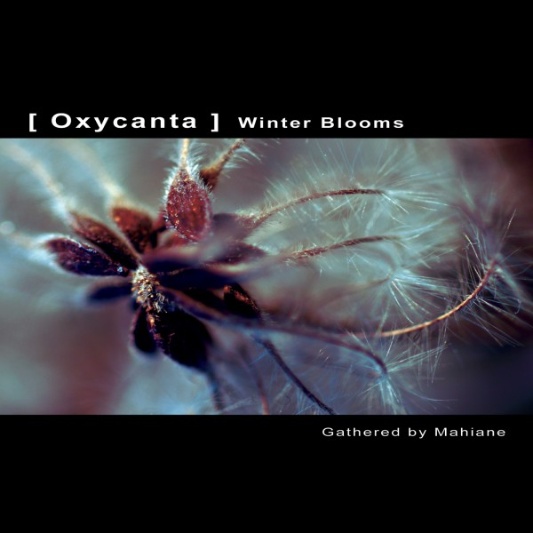 VA – OXYCANTA WINTER BLOOMS | Gathered by Mahiane – Download 16bit (Ultimae Records)
